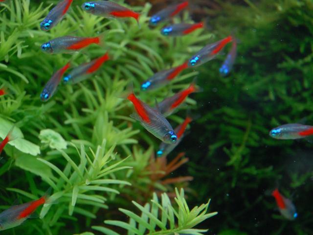 Aquarium for sale in bangalore dating