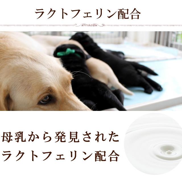 houndjame/5p13oct13_b玩具v玩具补充宠物用品,宠物用品狗种子口臭酱m酱口腔情趣之高跟鞋漆皮图片