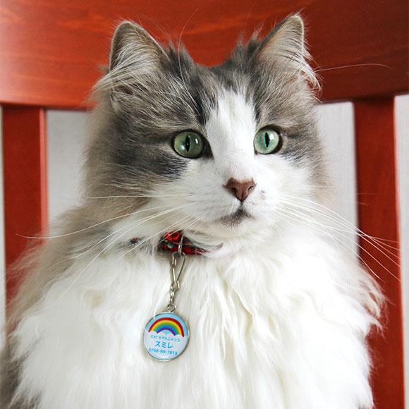 宠物·宠物用品 猫类用品 项圈·挽具 姓名牌 商品详细信息