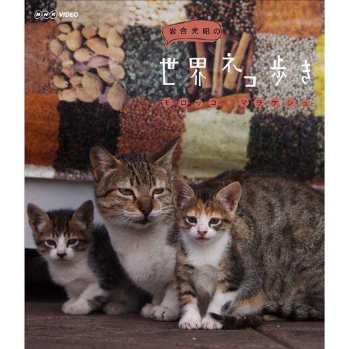 世界猫行走摩洛哥·马拉喀什动物摄影师,岩石合光昭征求可爱的猫等,在