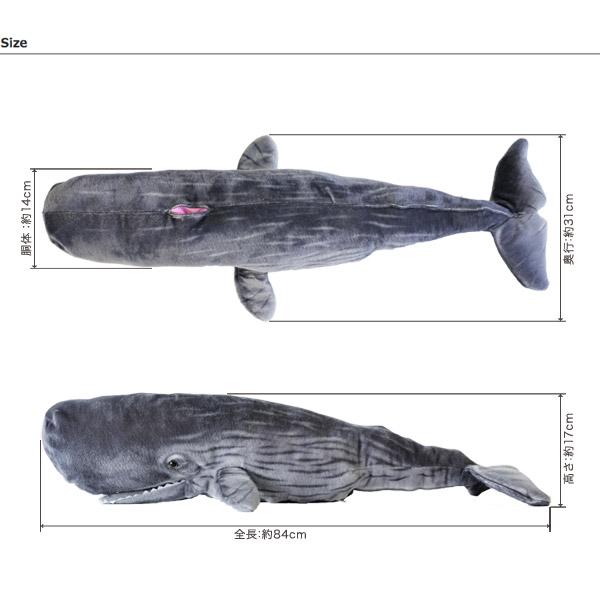 マッコウクジラの画像 p1_36