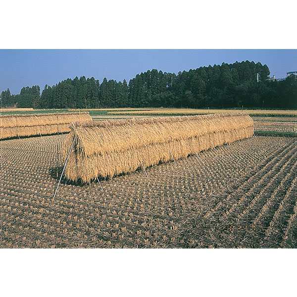 【送料込み】 稲の掛干し 3段掛ほすべー B-1型 約1反歩用(10a)セット 約40m