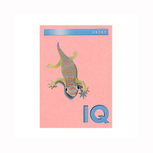 (まとめ) コピー用紙(カラー用紙) 伊東屋 バイオトップカラー ピンク BT504 9003974400174 1冊【5×セット】