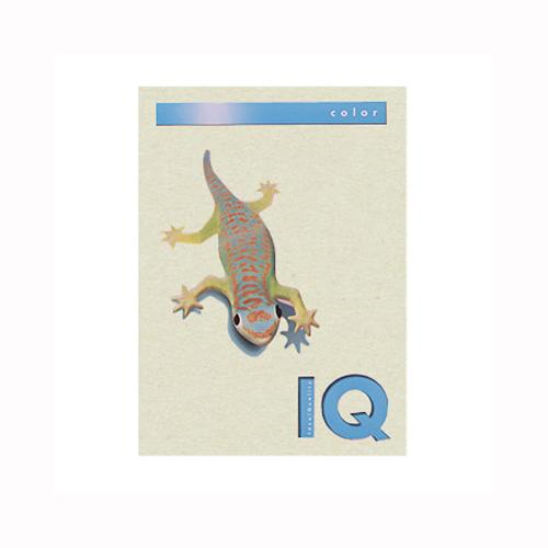 (まとめ) コピー用紙(カラー用紙) 伊東屋 バイオトップカラー グレー BT509 9003974412733 1冊【5×セット】