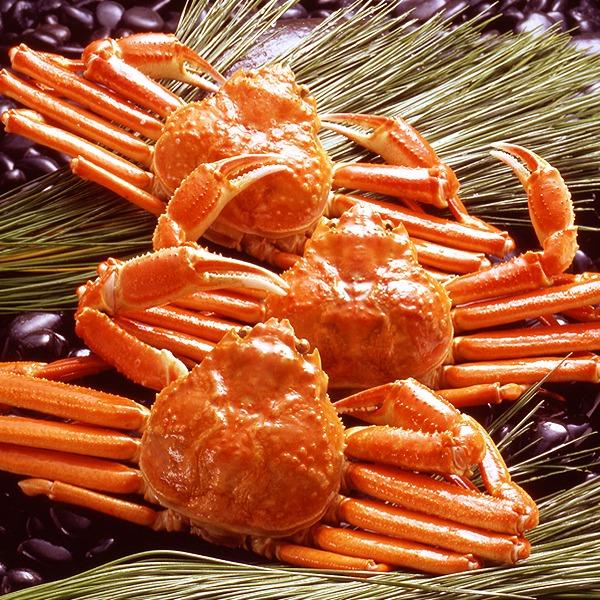 【身入り抜群のA級品!】カナダ産ボイルズワイガニ姿・約500g×3尾 冷凍ズワイ蟹