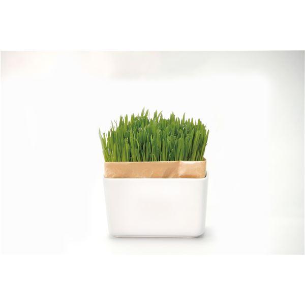 (まとめ)猫草栽培キット にゃんベジセット N 【×3セット】【ペット用品】
