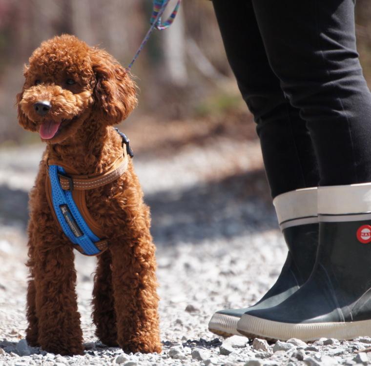 Germany's luxury dog brandosportharness