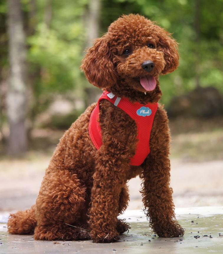 Switzerland luxury dog brand best eameshharness small-medium size dog