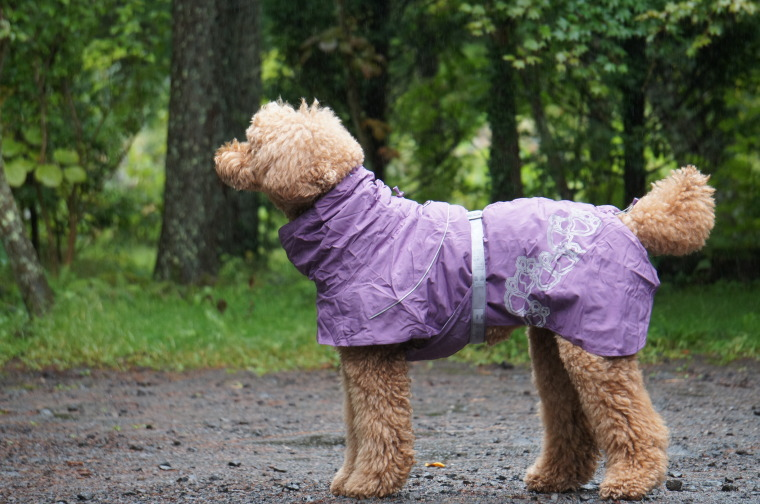 【Hurtta】【フルッタ】・ドッグレインコート 「Drizzle Coat ドリズルコート」大型犬用