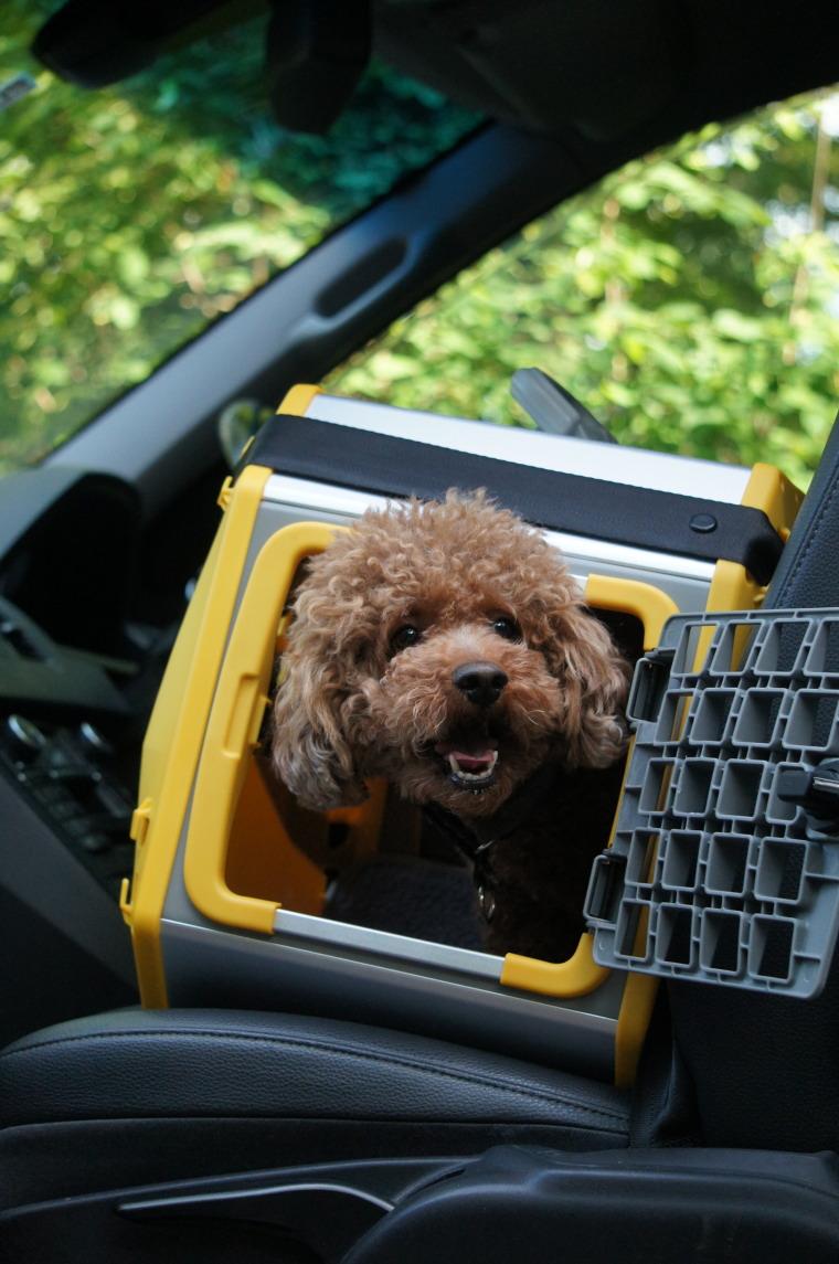 【送料無料】スウェーデン・MIM SAFEの安全性が高いドッグカークレイト【CARE2・Mサイズ】