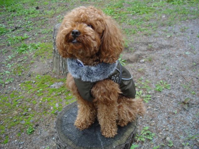 フィンランドのドッグブランド【Hurtta】【フルッタ】・ドッグコート【Winter Jacket・ウィンタージャケット】大型犬用
