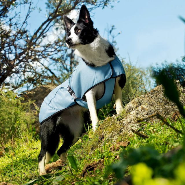 Finnish dog brand cooling coat (bawtie use)