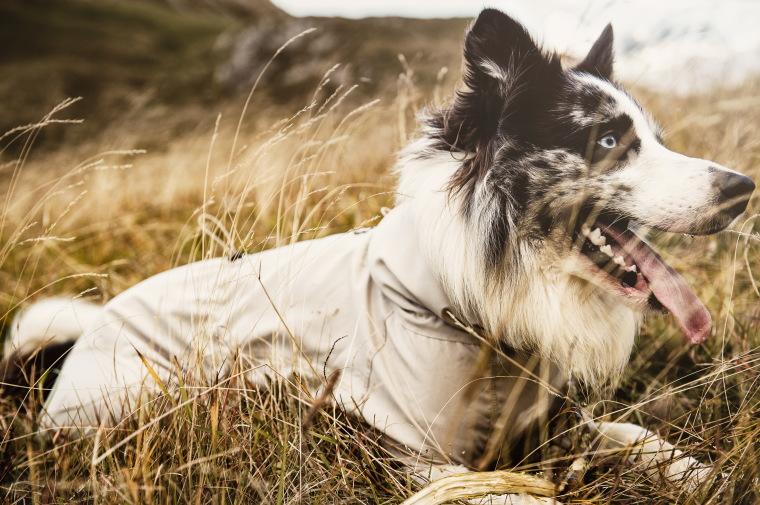 -Dog overalls SUN & Bug Blocker small dog-sized dog
