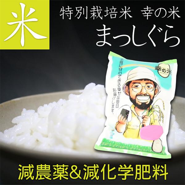 特別栽培米(減農薬&減化学肥料) お米 まっしぐら 2kg 毎日食べるから、体に優しいお米を。【青森 あおもり お土産 青森土産 名産 青森県産 青森の味 お買い得 訳あり ランキング ギフト お試し ご飯 ごはん おにぎり 白米 胚芽米 玄米 安心 安全 幸の米】