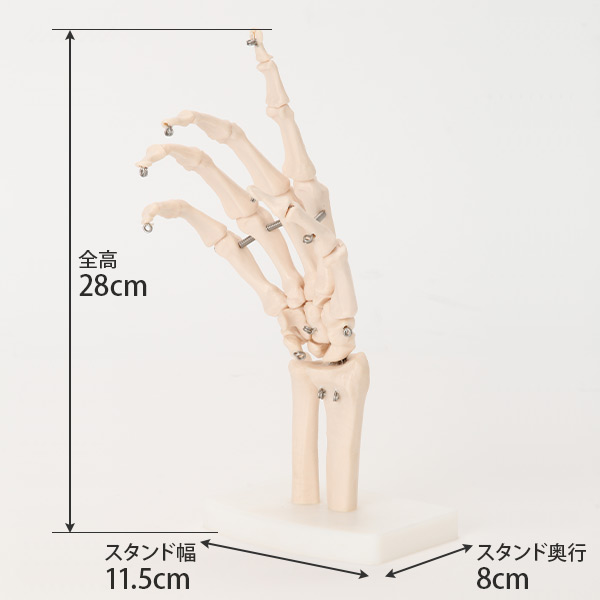 seven esthe: <7 ウェルネ> wrist model size of the original ...
