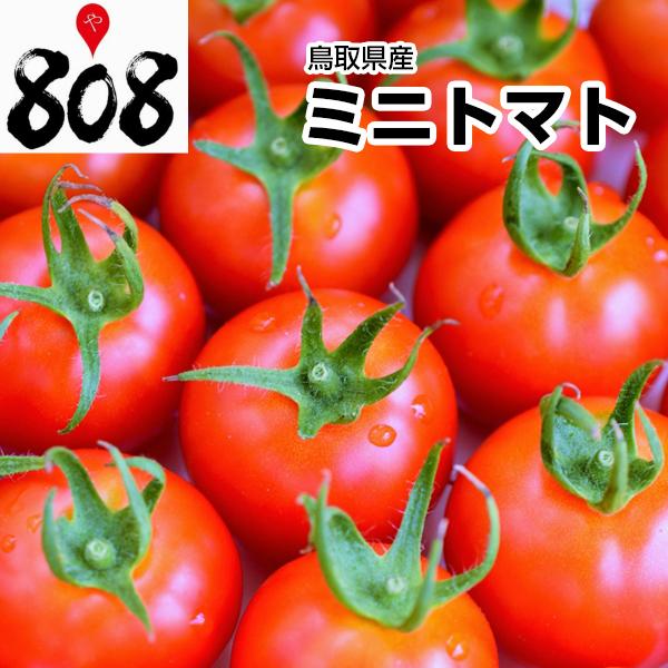注目ブランド ダイエット中にお勧めの食材 西日本産 ミニトマト 1パック 約200g 野菜詰め合わせセットと同梱で送料無料 送料別 とまと トマトジュース トマトケチャップ 大放出セール トマトソース 種 父の日 加工用 業務用 トマトダイエット ジュース 生食用 敬老の日 リコピン 苗 母の日
