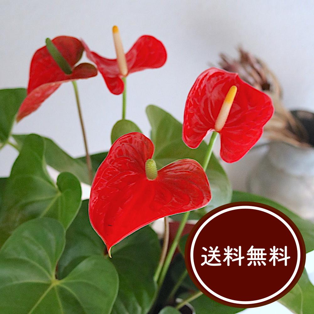 植物 室内 観葉
