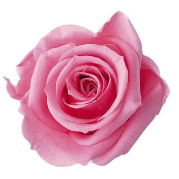 プレミアムローズ 1輪売り お値打ちフロールエバー最大のローズ しっかりとした存在感があります 即納 大輪 バラ 1輪 プリザーブドフラワー 花材 あす楽 送料無料 ハーバリウム フラワー アレンジ 資材 贈り物 卸 舗 花資材 薔薇 キット プレゼント フロールエバー 材料 ギフト プリザ 超激得SALE ローズ 手作り ハーバリウム花材 FL90 プリザーブド