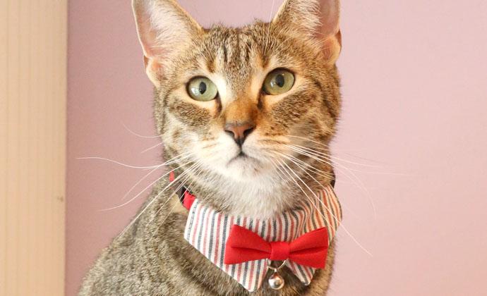 ●【メール便1個・ネコポス2個OK】【アモワークス】Cat Amo.k おめかしネクタイ カラー S・Mサイズ 猫用(レッド・ブルー)