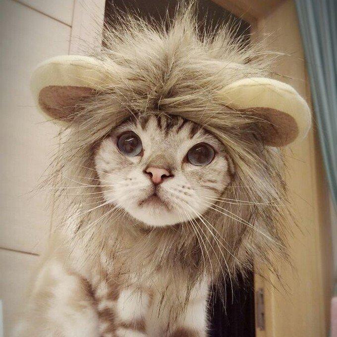 愛犬や愛猫を可愛くコスプレ♪SNS映え たてがみ コスチューム 耳付き ライオン CM 仮装 コスプレ 帽子 猫 小型犬 かわいい pw-06