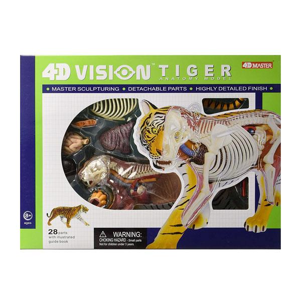 トラ 動物 解剖 模型 立体 モデル 4D 教材 模型 入学祝い Famemaster 通常便は送料無料