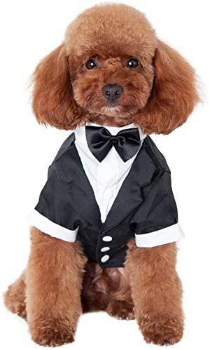 小型 犬 子犬