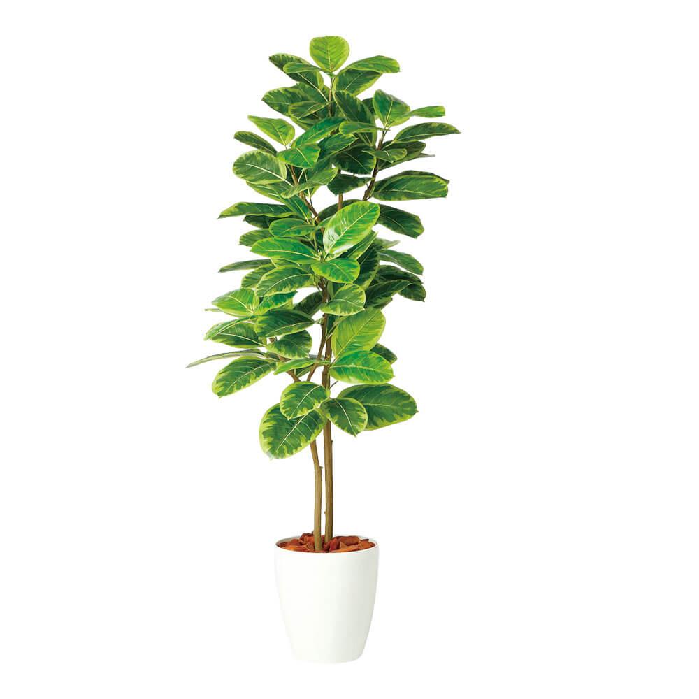 鉢植え 鉢 SG アルテシマ 株立 FST 98942 1.5m インテリア 木 グリーン 室内