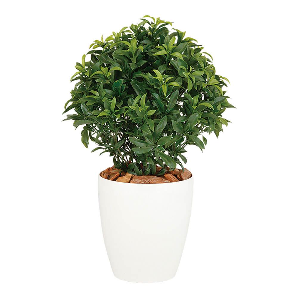 鉢植え 鉢 SG ベイリーフ 99141 0.7m インテリア 木 グリーン 室内