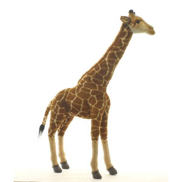 壁纸 动物 鹿 600_600