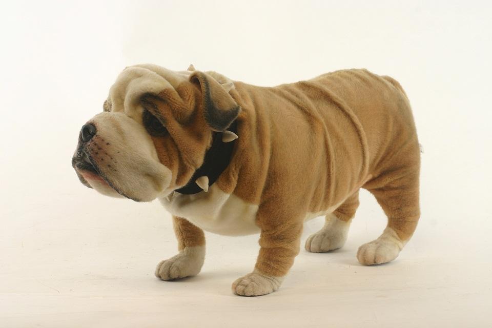 Agogonus Hansa British Bulldog 63 L 63 Cm 5626 Cute And Realistic