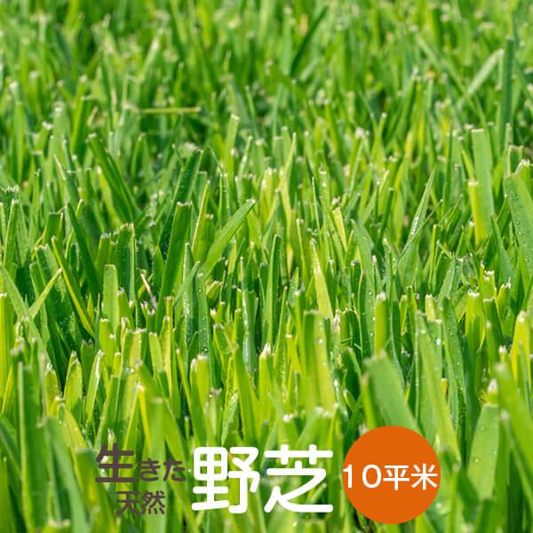 芝生 野芝 10平米【普通便】【送料無料】(ただし 北海道 / 沖縄 / 離島 を除く)