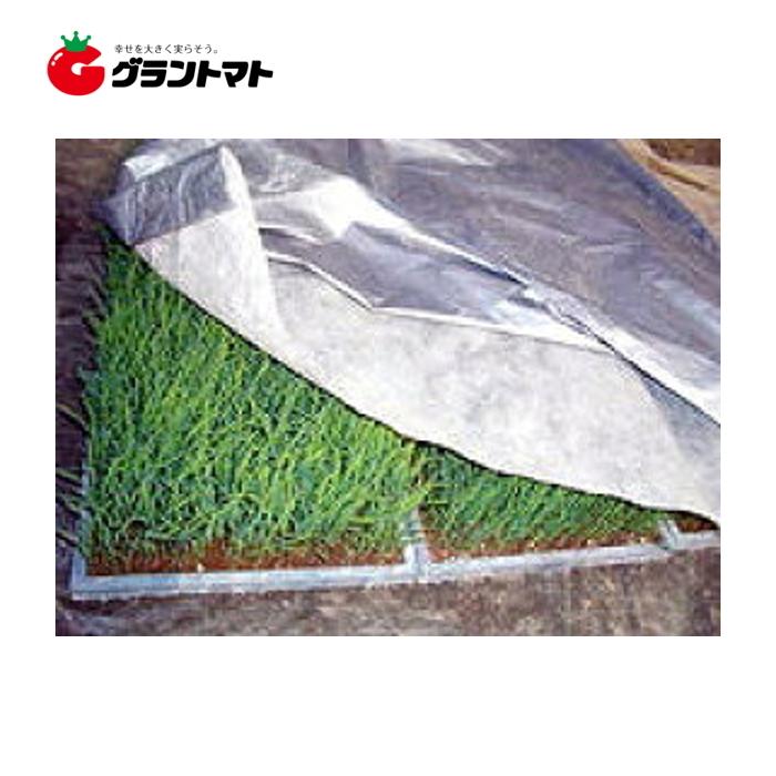 シルバーホッカ 2.3cm×50m 1枚 水稲用シルバーポリ 育苗用保温シート 岩谷マテリアル