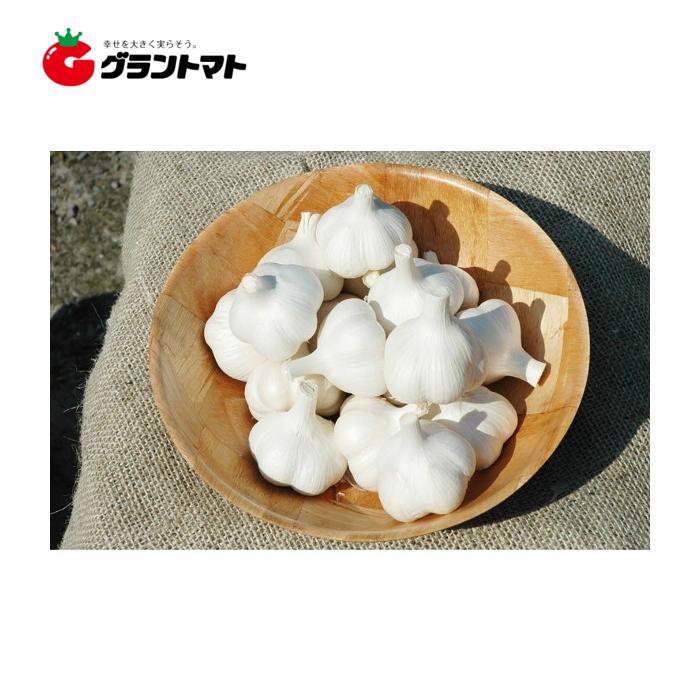 ホワイト六片ニンニク種子 爆安 1kg 日本メーカー新品 Mサイズ 約18個 青森県産