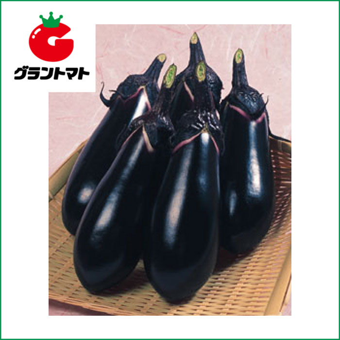 千両二号なす 2000粒 野菜種子【茄子 ナス】【取寄商品】