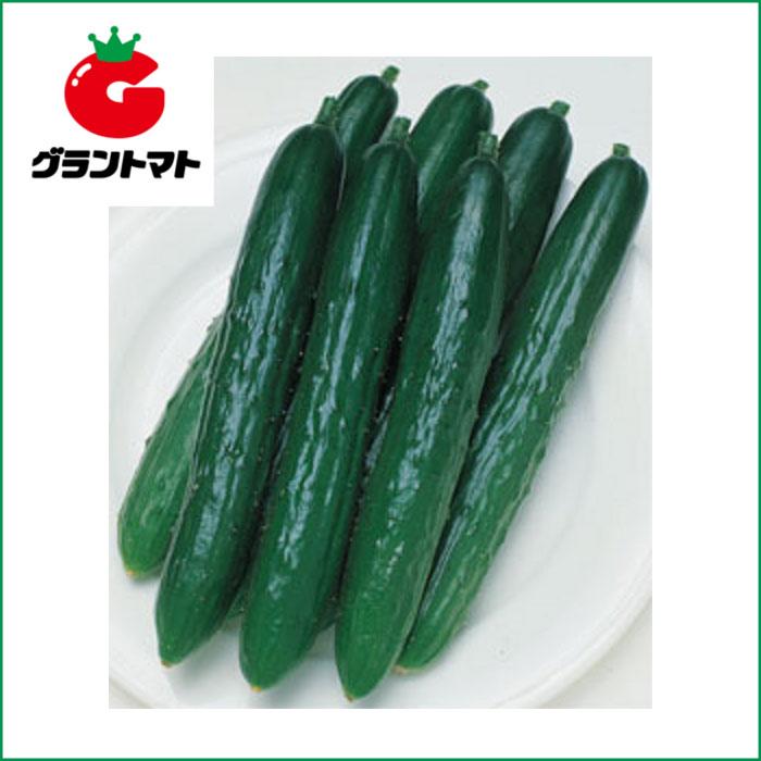 北進きゅうり 350粒 野菜種子【キュウリ キューリ】【取寄商品】