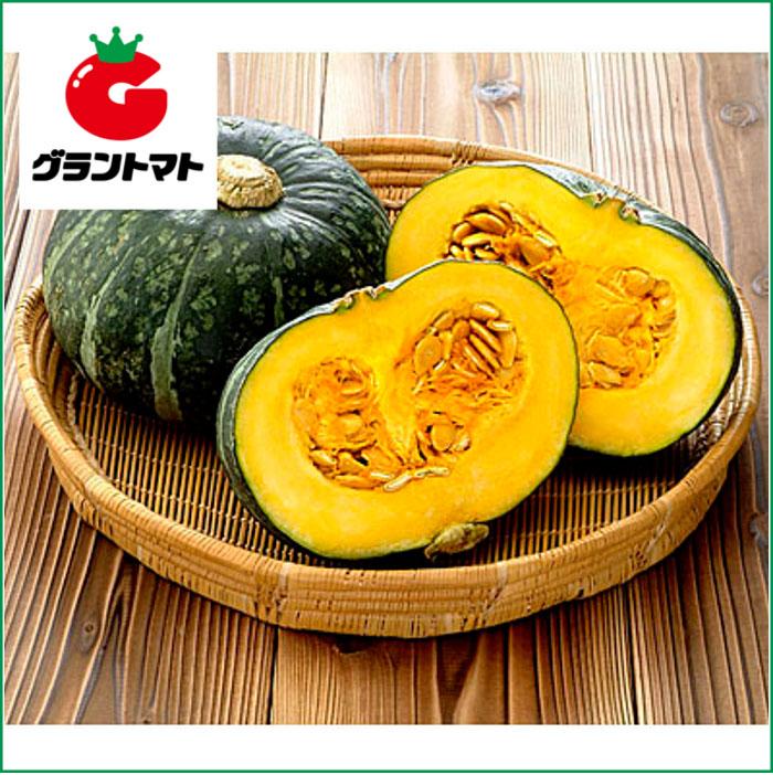 みやこ南瓜 10dl 野菜種子【かぼちゃ カボチャ】【取寄商品】