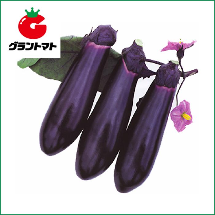 大黒田なす 20ml 野菜種子【茄子 ナス】【取寄商品】