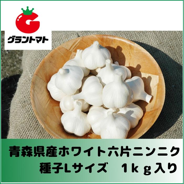 再再販 ホワイト六片ニンニク種子 1kg Lサイズ 再入荷/予約販売! 青森県産 約13個