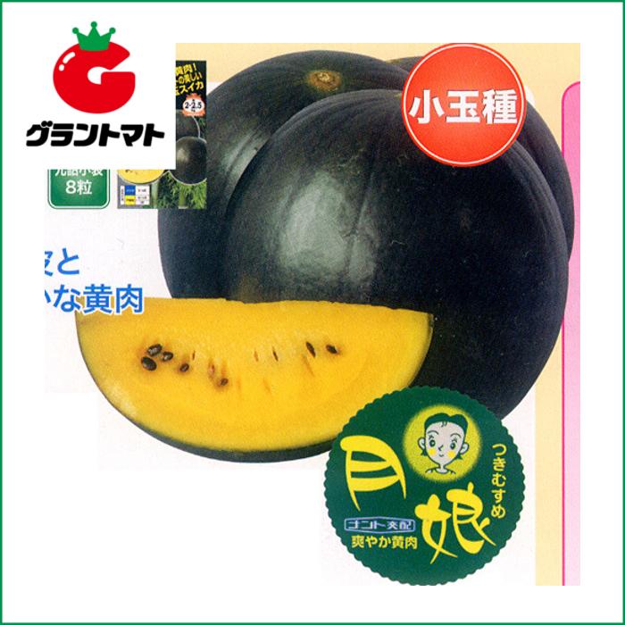 月娘西瓜 200粒 野菜種子【スイカ すいか】【取寄商品】
