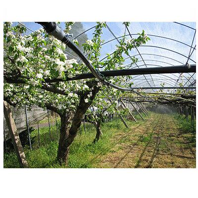 住化農業資材 ミストエース20 果樹 02 100m巻 両面穿孔・専用ハンガー縦向き設置 潅水チューブ 灌水チューブ