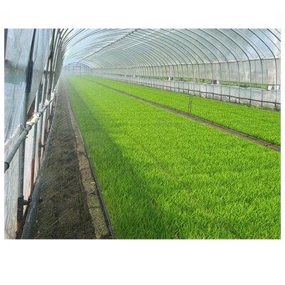 住化農業資材 ミストエース S54 S54 100m巻 (サイド灌水) ミストエース 潅水チューブ 潅水チューブ 灌水チューブ, あずはーと:b799f27b --- sunward.msk.ru