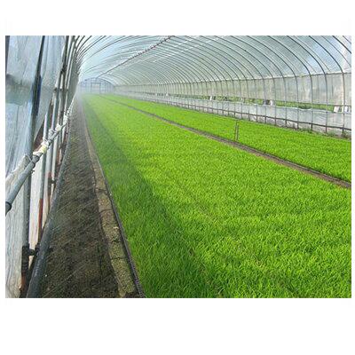 住化農業資材 ミストエース S54 110m巻 (サイド灌水) 潅水チューブ 灌水チューブ