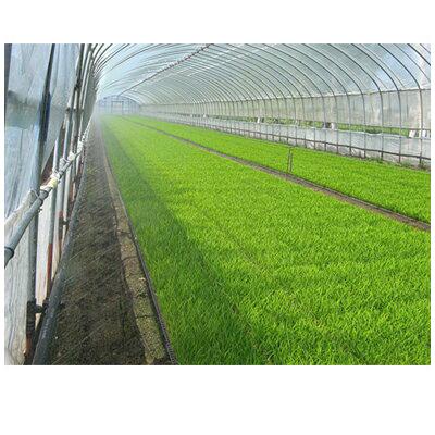 住化農業資材 ミストエース S54 120m巻 (サイド灌水) 潅水チューブ 灌水チューブ