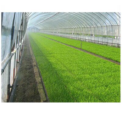 住化農業資材 ミストエース S72 110m巻 (サイド灌水) 潅水チューブ 灌水チューブ