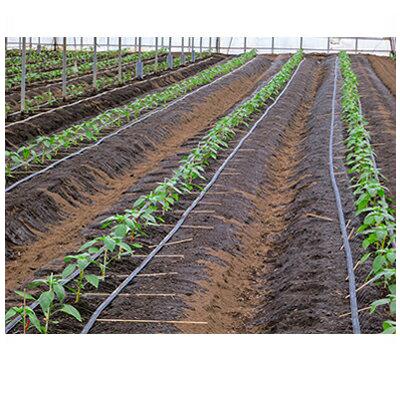 住化農業資材 ネオドリップ ヨコシタ 100 200m巻 (上)12.5千鳥(下)20千鳥 潅水チューブ 灌水チューブ