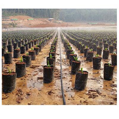 住化農業資材 スミサンスイ マーク 200m巻 孔径0.3mmφ 潅水チューブ 灌水チューブ