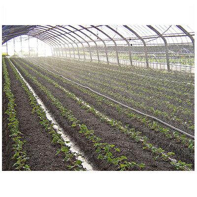 住化農業資材 スミサンスイ R育苗 120m巻 (~5.4m 高畝対応) 潅水チューブ 灌水チューブ