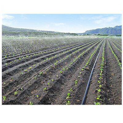 住化農業資材 スミサンスイ R露地ワイド 100m巻 ~10m 潅水チューブ 灌水チューブ