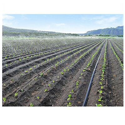 住化農業資材 18%OFF NEW スミサンスイ R露地ワイド 120m巻 潅水チューブ ~10m 灌水チューブ
