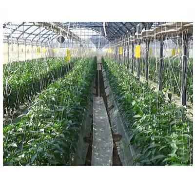 住化農業資材 スミチューブ 完売 06-60 ランキング総合1位 200m巻 0.6mmφ大孔 潅水チューブ 6千鳥 灌水チューブ